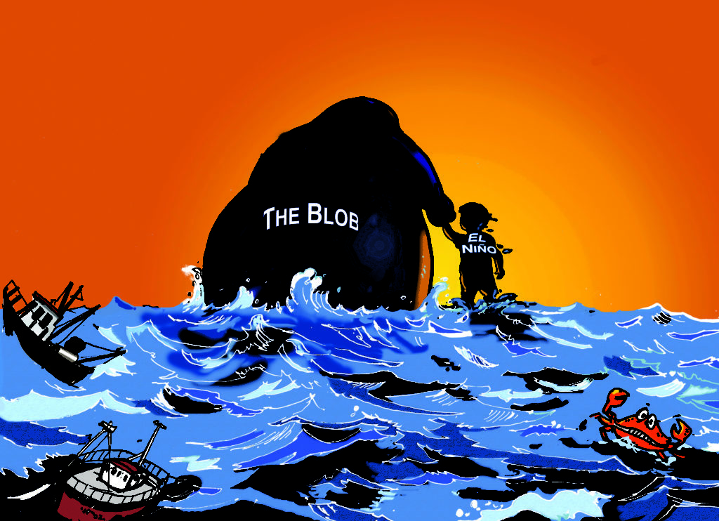 The Blob and El Nino are on their way out, leaving a disrupted marine ecosystem behind.
