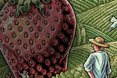 An illustration of a farmer staring at a large strawberry